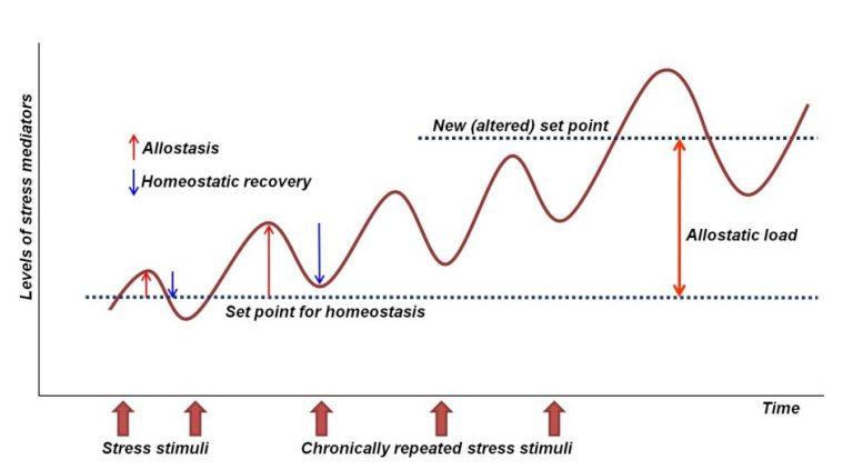 introducción al ejercicio terapeutico