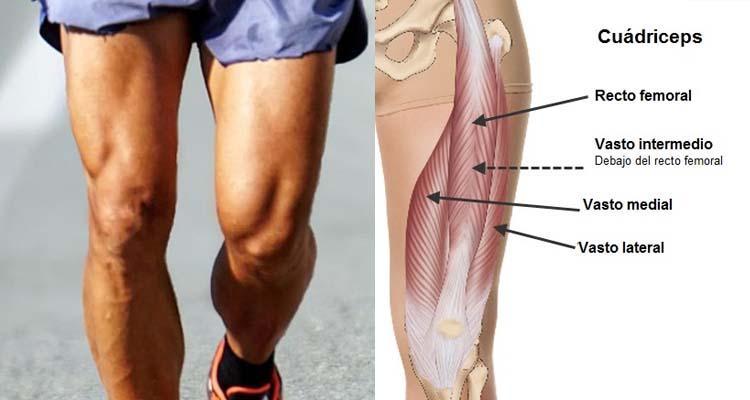 Lesiones musculares en cuádriceps