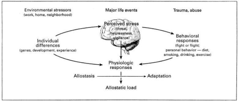 webinar para fisioterapeutas - ejercicio y alostasis
