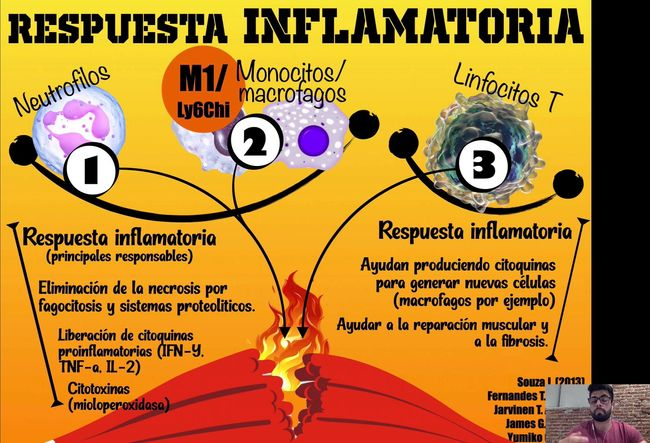 Patofisiología lesiones musculares